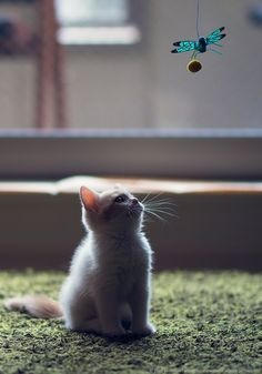 Kitten and Dragonfly Toy (by torode)