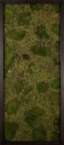 Moss and Lichen Landscapes, Think--wood frame (we make) **dark brown stain ** or use raw salvaged wood Living Green Wall, Eclectic Artwork, Moss Art, Natural Curiosities, Small Space Gardening, Salvaged Wood, Interior Design Inspiration, Decorative Objects, Picture Frames