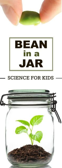 COOL KID SCIENCE: Grow a bean in a jar . I still remember doing this as a kid! Can't wait to do it with my little. #scienceforkids #springactivities #kidscience