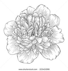 beautiful monochrome black and white peony flower isolated on white background. Hand-drawn contour lines and strokes.