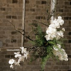 Orchids, twigs and ferns