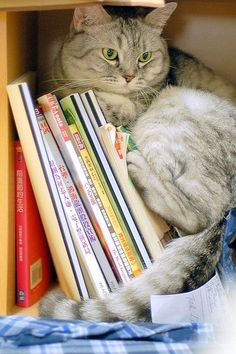 The book nook with a cat.