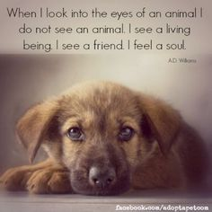 Inspiring Quotes about Animals. Visit Canine Support Teams to see how our service dogs restore hope to people's lives. www.caninesupportteams.org