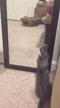 Playing with Mirror