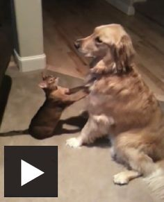 This is one of the cutest videos I've seen yet!  http://catvideooftheweek.com/videos/view/cute-video  #CVOTW