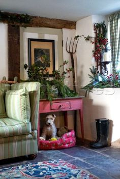 PE012_26: Dog sitting in his bed underneath a pink pai - Narratives Photo Agency