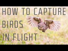 Ok, so don't actually throw away your wide angle lens. This video has been made to show that not all landscape images need to be photographed with a wide ang... Man Photography, Photography Tutorials, Wildlife Photography, Digital Photography, Fast Shutter Speed, Camera Settings, Landscape Art, Birds In Flight, Game Design