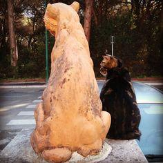 Statuaria mamma gatto #gatto