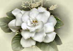 gardenia tattoo - Google Search