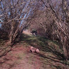 Sustainable living experience on a smallholding in rural Aberdeenshire, Scotland Animal Care, Sustainable Living, Farm Animals, Pet Care, Sustainability, Scotland, Eco Friendly, Plants, Planters