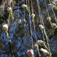 Test tube rose chandelier by Annie Francis francisfloristry
