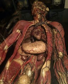 """ Anatomical Venus ca1865. Maker- Paul Zieler """