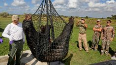 More than 200 bears killed at start of first Florida hunt in 21 years