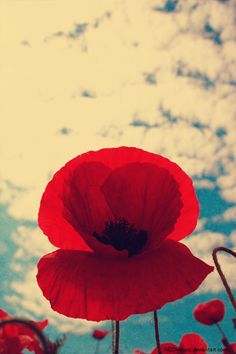 pretty poppy! i was considering this for save-the-dates... i guess i was getting hung up on the bright blue and fiery red