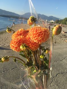 My 5 favourite fun & free summertime things to do in Vancouver — petite jilly Stuff To Do, Things To Do, Vancouver, Summertime, Fun, Beautiful, Things To Make, Hilarious