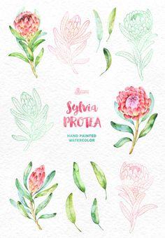 Sylvia Protea. Watercolor floral Clipart wedding by OctopusArtis