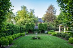Tone on Tone: Our Garden in Southern Living English Hornbeams at the end.