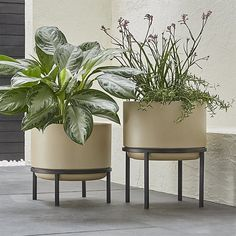 Shop Sand Tall Planter with Stand.  Elevate the look of your patio or deck with these striking planters with stands.  Simple black stands lift the planters off the ground, adding contrast to the pots' natural sand color.