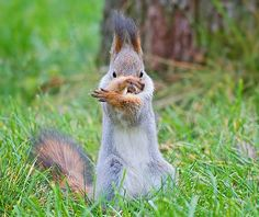 Tai chi squirrel. :)