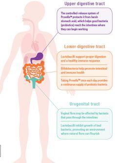 Ever take probiotics? Provella probiotics promote digestive, feminine and immune health