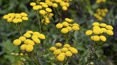 679 besten flora u fauna bilder auf pinterest in 2018 garten pflanzen lustige tiere und. Black Bedroom Furniture Sets. Home Design Ideas