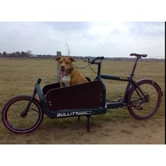 Quick cargo bike and perfect for our Basset Alfy Bullitt Cargo Bike, Biking With Dog, Bicycle, Racing, Motorcycle, Larry, Vehicles, Dogs, Transportation