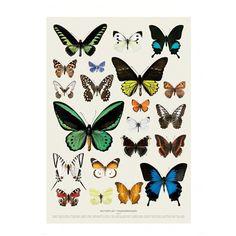 Myriad vlinders poster | Hagedornhagen | DesignLemonade.com