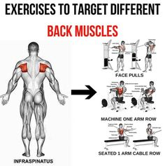 Infraspinatus - Exercises To Target Different Back Muscle 1