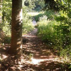 Uwielbiam takie zdjęcia robić-dają pole do wyobraźni...#las #drzewa #krzewy #trawy #ścieżka #słońce #cień #forest #trees #grass #path #sun #shadow