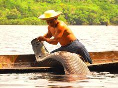 Pesca do Pirarucu no município de Presidente Figueiredo, no estado do Amazonas, Brasil.  Fotografia: mochileiro.tur.br