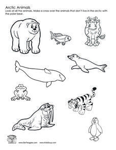 Polar Animals Printable Templates & Coloring Pages