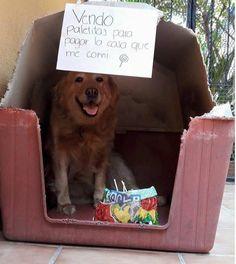 9 Mascotas que venden golosinas para pagar lo que rompieron - Taringa!