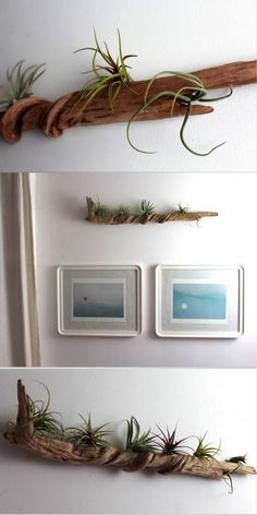 This is a beautiful decoration for the house and a way of introducing a piece of nature inside. To make a similar decoration you need a piece of driftwood, hooks, nails and some air plants that don't need soil. You should first clean the wood to get rid of the eventual bugs and unwanted bacteria and then screw the hooks to hang it on the wall. Add the plants and it's done. The plants need either to be placed in water once or twice a week or to be sprayed with water occasionally.