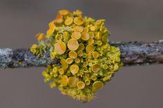 tilden lichens by damien jay, via Flickr
