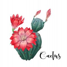 in desert vector and illustration Premium Vector - Kunst Anleitung Cactus in desert vector and illustration Premium Vector Cactus in desert vector and illustration Premium Vector Cactus Drawing, Cactus Painting, Cactus Art, Cactus Flower, Cactus With Flowers, Cacti And Succulents, Cactus Plants, Indoor Cactus, Watercolor Flowers