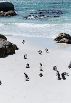 African Penguins Are The Charismatic Residents of Cape Town Africa Destinations, Holiday Destinations, Travel Destinations, In China, African Penguin, South African Art, Cape Town South Africa, Penguins, Places To Visit