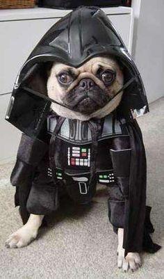 dog halloween pics | Disfraces graciosos para perros.