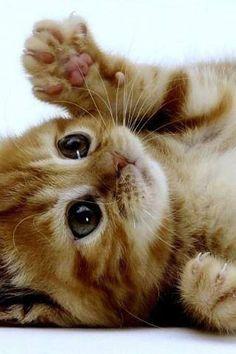 Playful Kitty - Cat Smirk