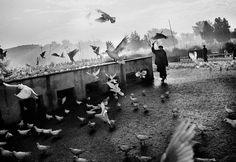 Сохранённые фотографии – 1 630 фотографий