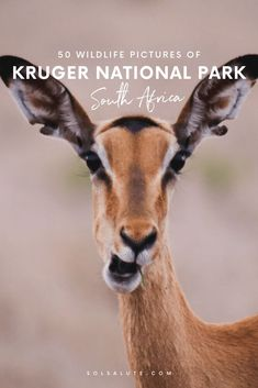 50 Pictures of Kruger National Park in November Safari photos and stories from our 5 days in Kruger. Kruger National Park, National Parks, Africa Destinations, Travel Destinations, Baboon, Wild Dogs, Africa Travel, South Africa, Travel Inspiration