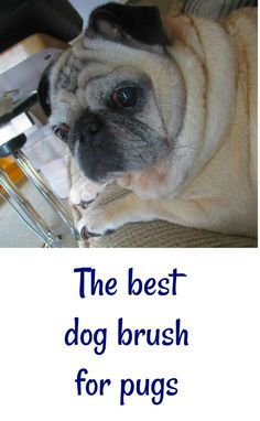 The best dog brush for pugs - and why we stopped using the furminator.