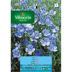 streptocarpus 39 dee 39 blue garden pinterest blue garden gardens and flowers. Black Bedroom Furniture Sets. Home Design Ideas