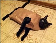 Coming from a poor family, Lisa started making her own clothes at an early age... Cats