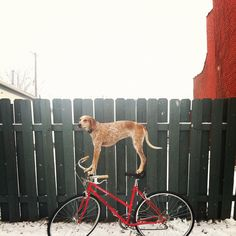 Theron Humphery's Maddy rides a bike