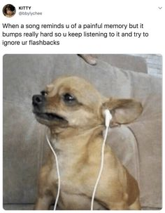When a song reminds u of a painful memory but… Sarcastic Quotes, Funny Quotes, Funny Memes, Cute Funny Animals, Funny Dogs, Pet Boutique, Best Dogs, Dog Breeds, Dogs And Puppies