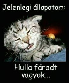 Jelenlegi állapoto, Hulla fáradt vagyok! Jó éjt! Good Night, Lol, Words, Funny, Quotes, Nighty Night, Quotations, Funny Parenting, Good Night Wishes