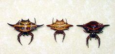 Wow Real Framed Flying Saucer 3 Spider Set Display 7932. $39.99, via Etsy.