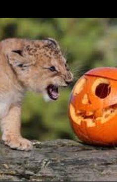 Halloween is coming ...
