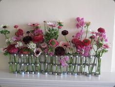 Ranunculus in a row. Cool idea.