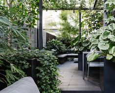 Clever use of space and a green-on-green palette has transformed this inner-city terrace into a private oasis courtesy of Lisa Ellis Gardens. garden How to create an inner-city terrace garden Small Backyard Gardens, Backyard Patio, Backyard Landscaping, Outdoor Gardens, Modern Gardens, Garden Modern, Small Backyards, Modern Landscaping, Small Patio